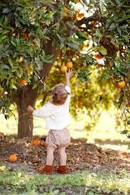 apple falls far from tree